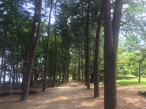Path on Nami Island was stroller friendly